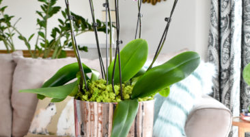 ORCHID ARRANGEMENT TUTORIAL