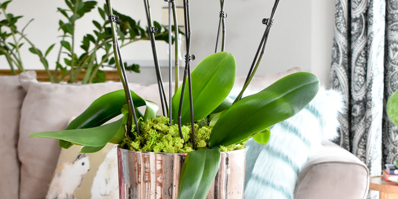 Orchid arrangement tutorial for a coffee table centerpiece.