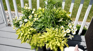HOW TO PLANT A CONTAINER FLOWER POT – TUTORIAL